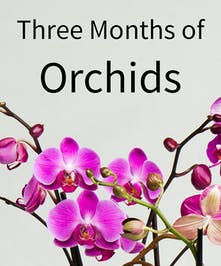 Three Months of Orchids