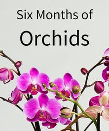 Orchids Every Month for 6 Months