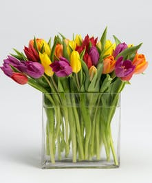Colorful mix of tulips in rectangular glass vase