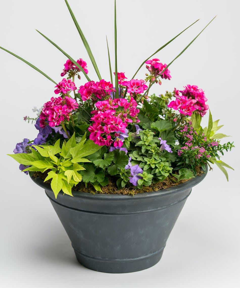 blooming spring annuals in black ceramic container