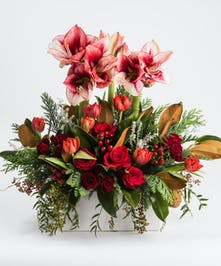 unique collection of red roses and peppermint amaryllis in a white ceramic container