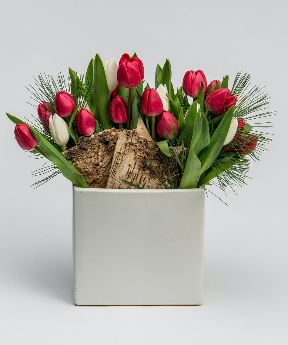 red and white tulips in a white ceramic container