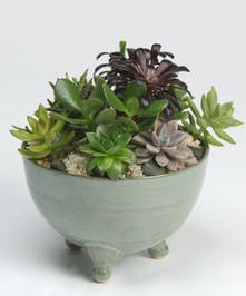 Succulent garden in footed green ceramic container