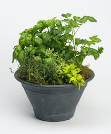 Herb Planter in Ceramic