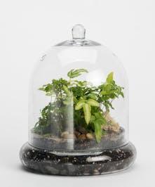 mini terrarium with green plants