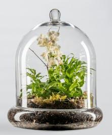 mini orchid in glass terrarium