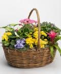 Premium English Garden Basket