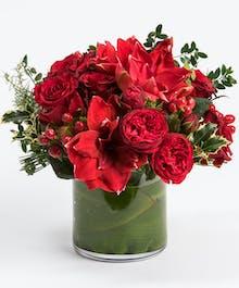 Red Rose & Amaryllis Classic