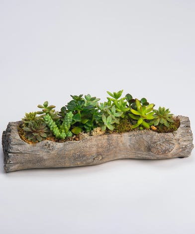 succulent garden in faux wooden log