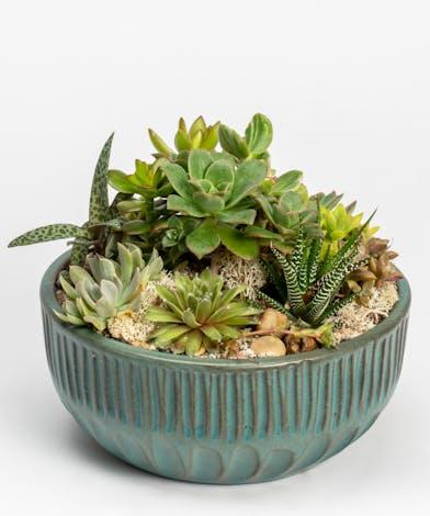 Succulent Garden in Ceramic