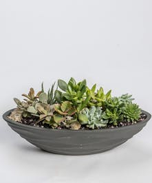 Succulent Garden in Ceramic