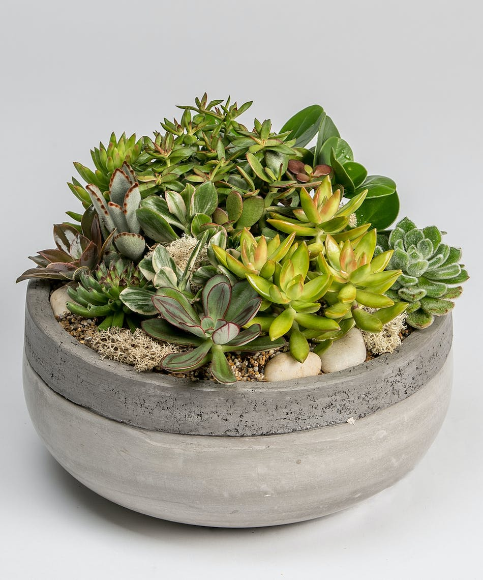 Succulent Gardens Delivery Philadelphia PA Robertsons Flowers
