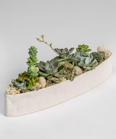 Succulent Garden in oblong ceramic