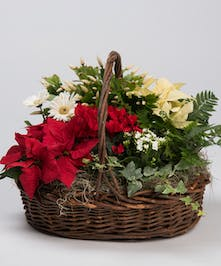 A stunning collection of beautiful plants mixed in with green plants and ivy for this full and luxurious gift.