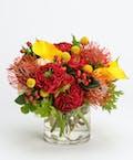 Radiant Blooms