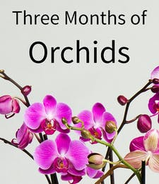 3 Months of Orchids