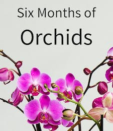 6 Months of Orchids