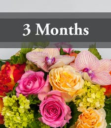 3 Months of Flowers
