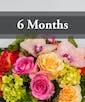 $100 arrangement per month