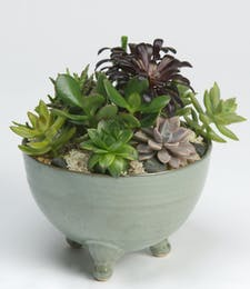 Medium Succulent Garden (Green Ceramic)