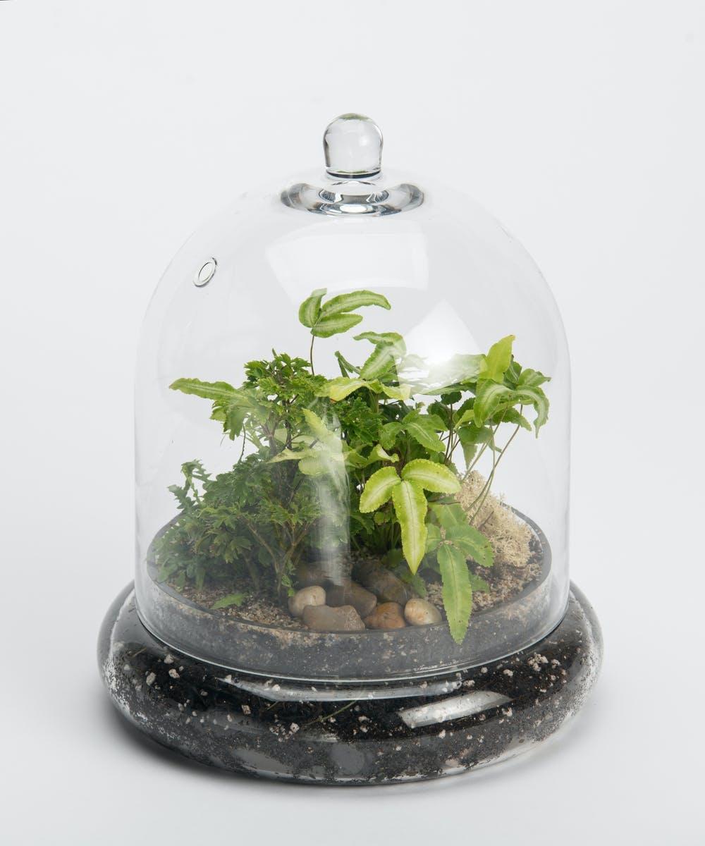 Mini Terrarium Plant Delivery Philadelphia Florist Robertson S