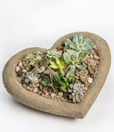 Succulent Garden Heart