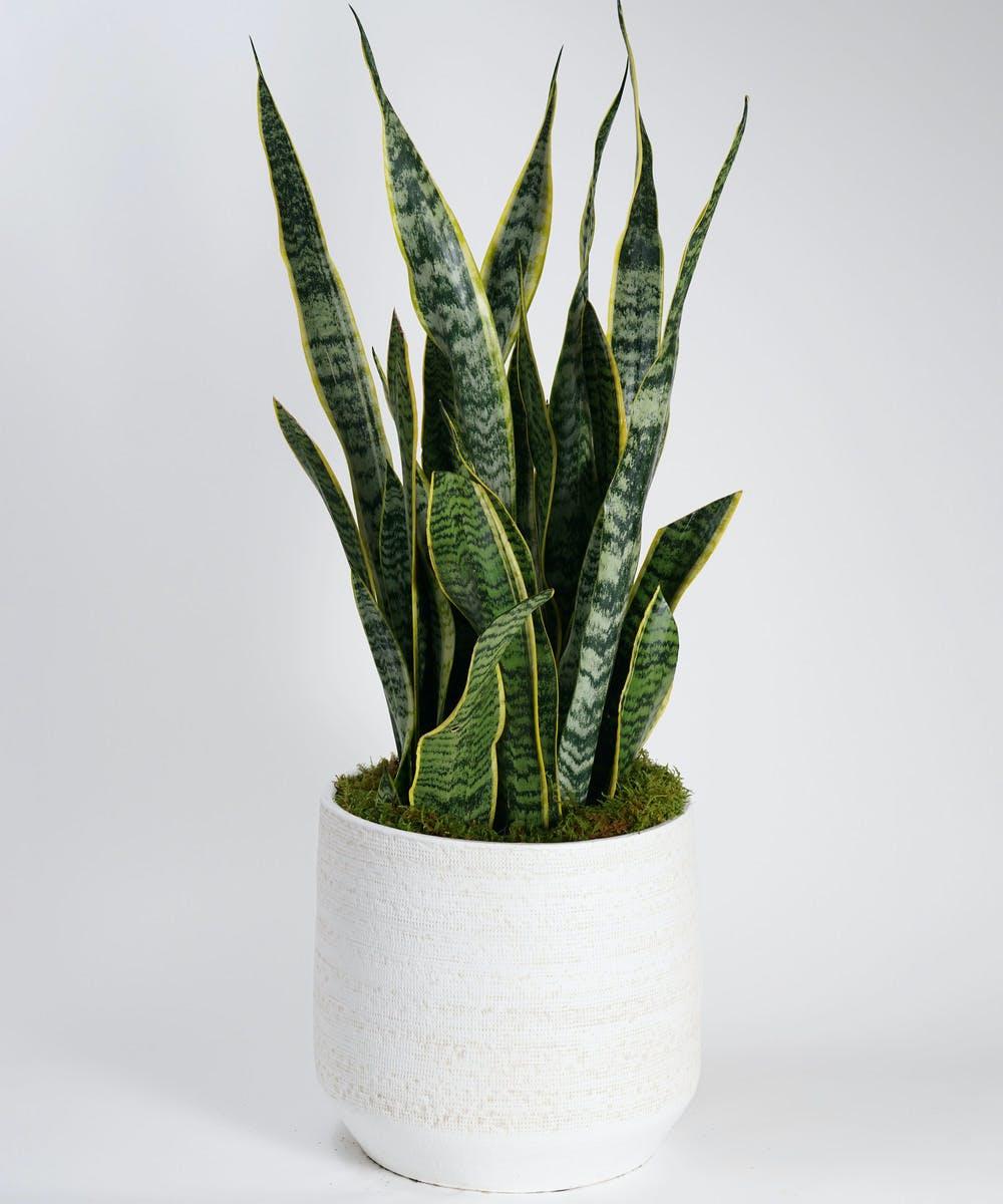 Home & Indoor Plants, Philadelphia Delivery