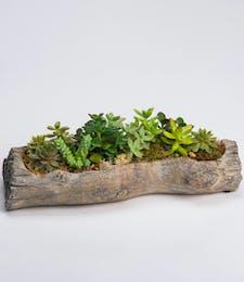 Succulent Log