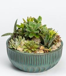 Large Succulent Garden (Bowl)