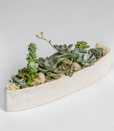 Medium Succulent Garden (White Ceramic)