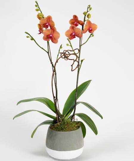 All Plants