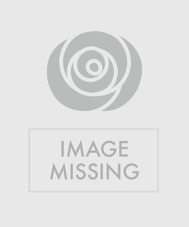 White Flower Arrangement Philadelphia Pa Florist